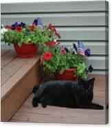 Lounging Black Cat Canvas Print