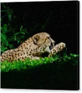 Lounging Cat Canvas Print