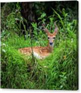 Lounging Fawn Canvas Print