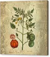 Love Apple Botanical  Canvas Print