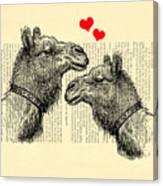Love Camels Canvas Print