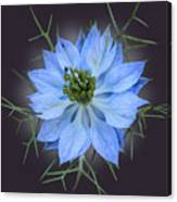 Love In A Mist Black With Light Canvas Print