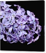 Love In Lilac Canvas Print