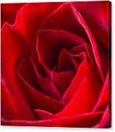 Love Is A Red Rose Canvas Print