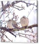 Love Is In The Air - Mourning Dove Couple Canvas Print