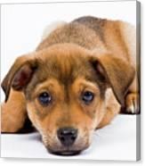 Love Me Puppy Canvas Print