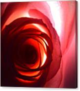 Love Me Tender As The Petals Of This Rose Canvas Print