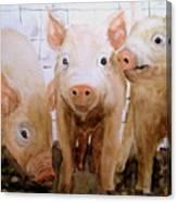 Love On The Farm  Canvas Print
