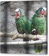 Love Parrots Canvas Print