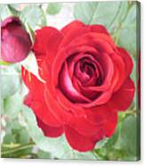 Love Roses Canvas Print