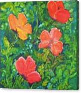 Love Those Poppies Canvas Print