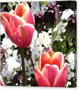 Love Tulips Canvas Print