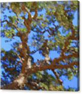 Lovely As A Tree Canvas Print