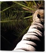 Lovely Bunch Of Coconuts Canvas Print