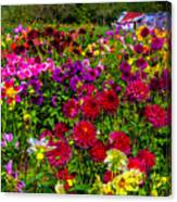 Lovely Dahlia Garden Canvas Print