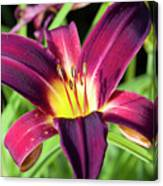 Lovely Day Lily Canvas Print