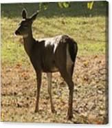 Lovely Deer Canvas Print