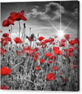 Lovely Field Of Poppies With Sun  Canvas Print