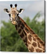 Lovely Giraffe In Tarangire - Square Format Canvas Print