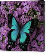 Lovely Green Winged Butterffly Canvas Print