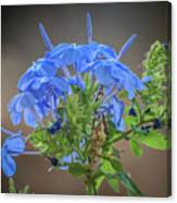 Lovely In Blue Canvas Print