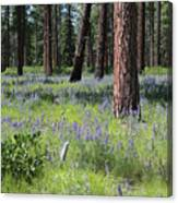 Lovely Lupine In The Mountains Canvas Print