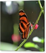 Lovely Orange Oak Tiger In The Spring Canvas Print