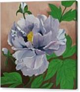 Lovely Peony Flower With Buds Canvas Print