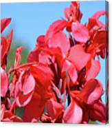Lovely Pink Flowers  Canvas Print