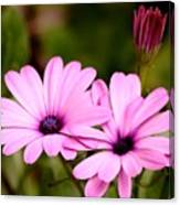 Lovely Pink Petals Canvas Print