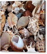 Lovely Seashells Canvas Print
