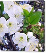 Lovely Spring Canvas Print