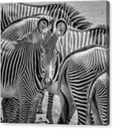 Lovely Stripes  7589bw Canvas Print