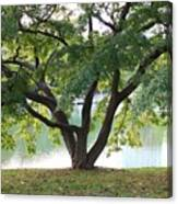 Lovely Tokyo Tree With Pond Canvas Print