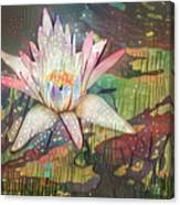 Lovely Waterlilies 2 Canvas Print