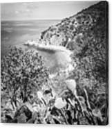 Lover's Cove Catalina Island Black And White Photo Canvas Print
