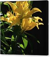 Lover's Lilly Canvas Print