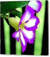 Loving The Color Purple Canvas Print