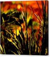 Loving The Warmth Canvas Print