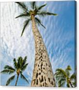 Low Angle View Of Palm Tree Canvas Print