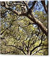 Low Angle View Of Trees In A Park Canvas Print