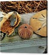 Low-country Still-life Canvas Print