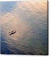 Low Flight Canvas Print