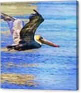Low Flying Pelican Canvas Print