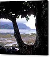 Low Tide And The Tree Canvas Print