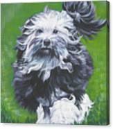 Lowchen Canvas Print