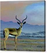 Lowell's Gazelle Canvas Print