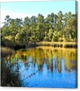 Lower Suwannee National Wildlife Refuge Ti Canvas Print