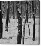 Lowland Winter Canvas Print