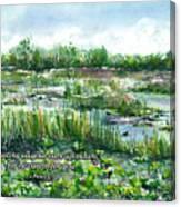 Loxahatchee Marsh 1 Peter 5 Canvas Print